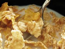 spoon zbóż Zdjęcie Royalty Free