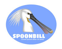 Spoonbill bird Stock Photo