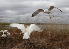 Spoonbill och seagull Royaltyfri Foto