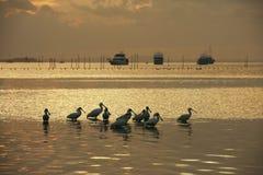 Spoonbills w zatoce fotografia royalty free