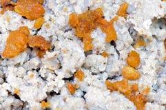 Spoonbread de sarrasin avec des crépitements Images libres de droits