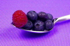 Spoonful of Blueberries royalty free stock photography