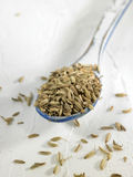 Spoonful of fennel seeds Stock Photography