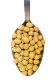 Spoonful of soy beans Royalty Free Stock Photography