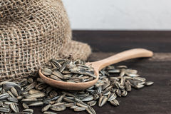 Spoonful of Sunflower Seeds and Gunny Bag Stock Images