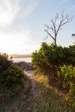 Spoor aan een strand met zonlicht Stock Foto