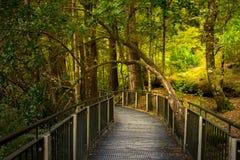 Spoor bij Spiegelmeer, de beroemde aantrekkelijkheid in Milford-Geluid, het Nationale Park van Fiordland, Nieuw Zeeland stock afbeeldingen