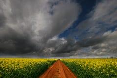 Spoor door de bloemgebied van het Raapzaad Stock Foto's