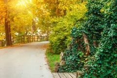 Spoor in herfstpark met zonnige zonnestraal stock foto's