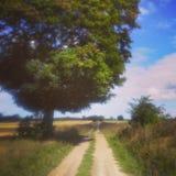 Spoor in het platteland Stock Fotografie