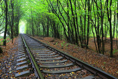 Spoorweg in bos royalty-vrije stock afbeelding