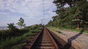 Spoorweg die langs het strand op kust een bos met naaldbomen en tropische bomen doornemen stock videobeelden