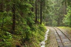 Spoorweg door bos royalty-vrije stock afbeelding
