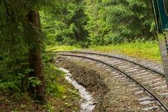 Spoorweg door bos stock foto's