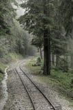 Spoorweg door bos stock fotografie