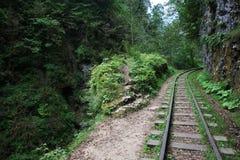 Spoorweg in een bos Stock Fotografie