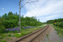 Spoorweg in een de zomerlandschap Stock Afbeelding