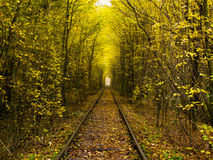 Spoorweg en bos Royalty-vrije Stock Fotografie