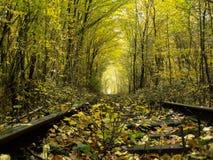 Spoorweg en bos Stock Foto