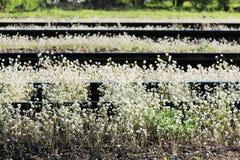Spoorweg en witte bloemen van een herders` s zak Capsella Royalty-vrije Stock Foto's