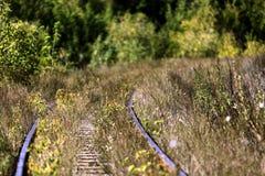 Spoorweg in het bos stock foto's