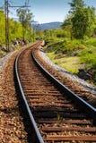 Spoorweg in het hout Stock Afbeelding