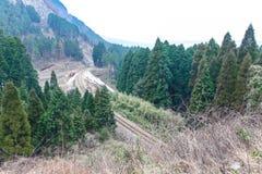 Spoorweg in het hout, Japan Stock Afbeeldingen