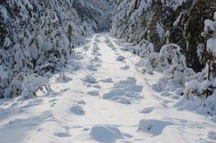 Spoorweg onder de sneeuw Stock Fotografie