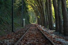 Spoorweg tegen bomen Royalty-vrije Stock Foto