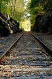 Spoorweg in wildernis Stock Afbeeldingen