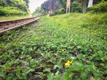 Spoorwegenaard en bossen Stock Foto