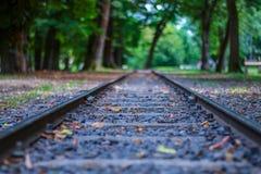 Spoorwegsporen, in het bos stock afbeelding