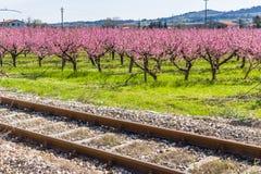 Spoorwegsporen langs tot bloei komende die perzikbomen met fungic worden behandeld stock afbeeldingen