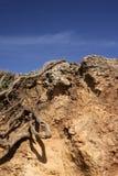 Sporchi la terra Fotografia Stock Libera da Diritti