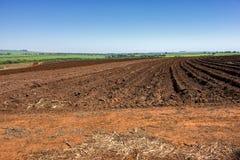 Sporchi presto dopo il raccolto dell'arachide un giorno soleggiato a Sao Paulo, Brasile fotografia stock libera da diritti