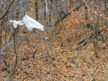 Sporchi, rifiuti nella foresta nella caduta tarda sulle tracce di escursione attraverso gli alberi sulla forcella gialla e Rose C Immagine Stock Libera da Diritti