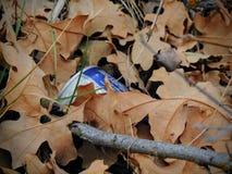 Sporchi, rifiuti nella foresta nella caduta tarda sulle tracce di escursione attraverso gli alberi sulla forcella gialla e Rose C Immagine Stock