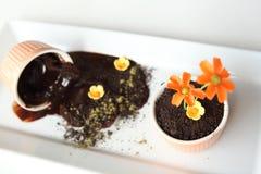 Sporcizia del budino al cioccolato fotografia stock libera da diritti