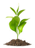 Sporcizia del mucchio con una pianta verde fotografia stock libera da diritti