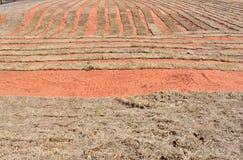 Sporcizia rossa di un'azienda agricola della zolla di Oklahoma nell'inverno Fotografia Stock Libera da Diritti