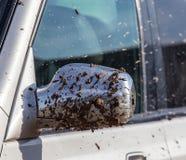 Sporcizia sullo specchio dall'automobile immagine stock libera da diritti