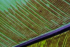 Spore of fern leaf Stock Photo