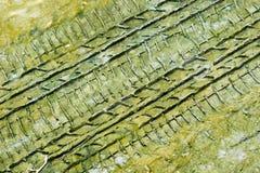 Sporen in de moddertextuur Royalty-vrije Stock Foto