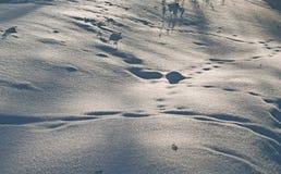 Sporen in de sneeuw Royalty-vrije Stock Foto