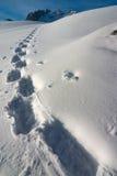 Sporen in de sneeuw Royalty-vrije Stock Afbeelding
