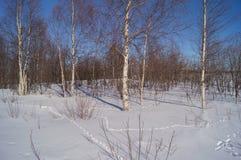 Sporen in de sneeuw Stock Foto's