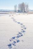 Sporen in de sneeuw Stock Afbeeldingen