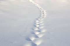 Sporen in de sneeuw royalty-vrije stock foto's