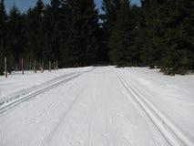 Sporen in de sneeuw in de winterbos Royalty-vrije Stock Fotografie