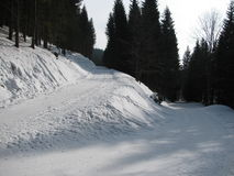 Sporen in de sneeuw in de winterbos Stock Foto